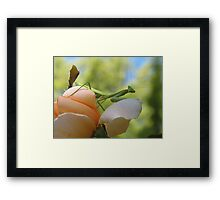 Here's Looking at You Kiddo Framed Print