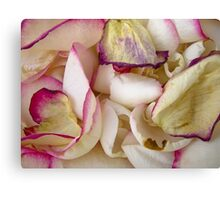 Rose Petals 7 Canvas Print