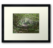 Pathway through the woods. Framed Print