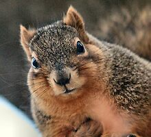 It's my winter coat...not the pecans you give me.... by MoreKeala