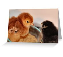 If I stand in breakfast I'm first fed! Greeting Card
