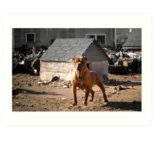 Junk Yard Dog Art Print