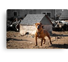 Junk Yard Dog Canvas Print