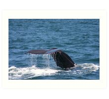 Sperm Whale Art Print