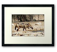 Jackal with Sandgrouse prey  Framed Print