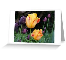 Beautiful Tulips Greeting Card