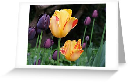 Beautiful Tulips by George Cousins