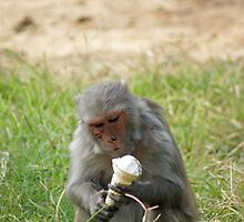 A monkey enjoying an ice cream cone by ashishagarwal74