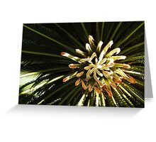 Cycad Fingers Greeting Card