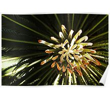 Cycad Fingers Poster