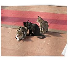 3 Cats looking pensive Poster