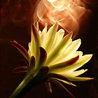 Blooming Fire by StarshinePhoto