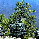 Pine View, Kings Bluff Pedestal Rock, NW Arkansas. by NatureGreeting Cards ©ccwri