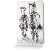 Overo Paint Fillies Greeting Card