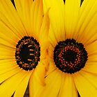 Daisy Twins by AlisonOneL