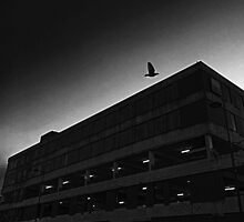 Lonely Flight by KAMCAM