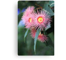 pink eucalypt Canvas Print