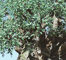 Tree of Life by claudiaiarce