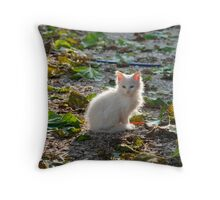 White Kitten in Sunlight  Throw Pillow