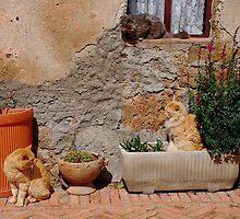 Three Cats Enjoying Sunshine  by jojobob