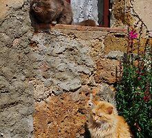 Two Cats Enjoying Sunshine  by jojobob