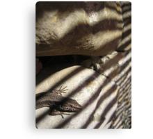 Lizard on Rock with Stripy Shadow Canvas Print