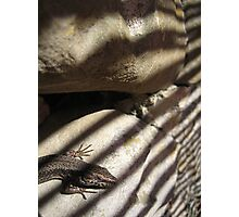 Lizard on Rock with Stripy Shadow Photographic Print
