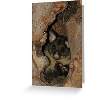 Brush-tail possum at home  Greeting Card