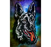 German shepherd Photographic Print