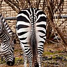 Do These Stripes Make My Ass Look Fat? by BigD