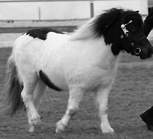 Black & White Pony In Black & White by Jenny Brice