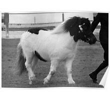 Black & White Pony In Black & White Poster