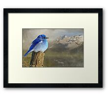 return to the high country mountain bluebird Framed Print