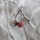 White Berries by Ardisrawr