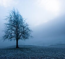 moody winter tree by peterwey
