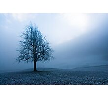 moody winter tree Photographic Print