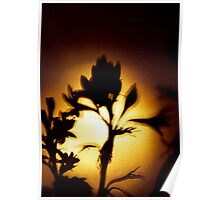 Flower Shadow Poster