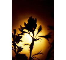 Flower Shadow Photographic Print