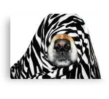 Guess Who! (Molly as zebra) Canvas Print