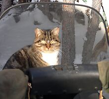 Skooter Wants a Snowmobile Ride by MaeBelle