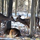 Goodmorning Kiss by Jarede Schmetterer