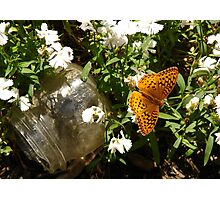 Butterfly and Ball Jar Photographic Print