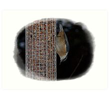 Bird Eating Up-side-Down Art Print