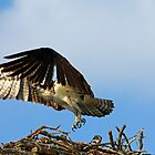 Here She Comes by Debbie Oppermann