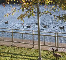 Geese Followers by WaleskaL