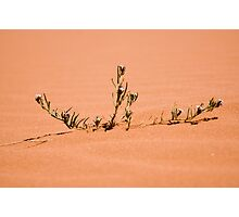 Desert Flower Photographic Print