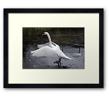 Dancing on ice Framed Print