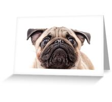 Gizmo the Pug Puppy Greeting Card