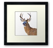 silly deer Framed Print