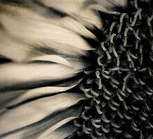 Sunflower Mono by Melinda Anderson